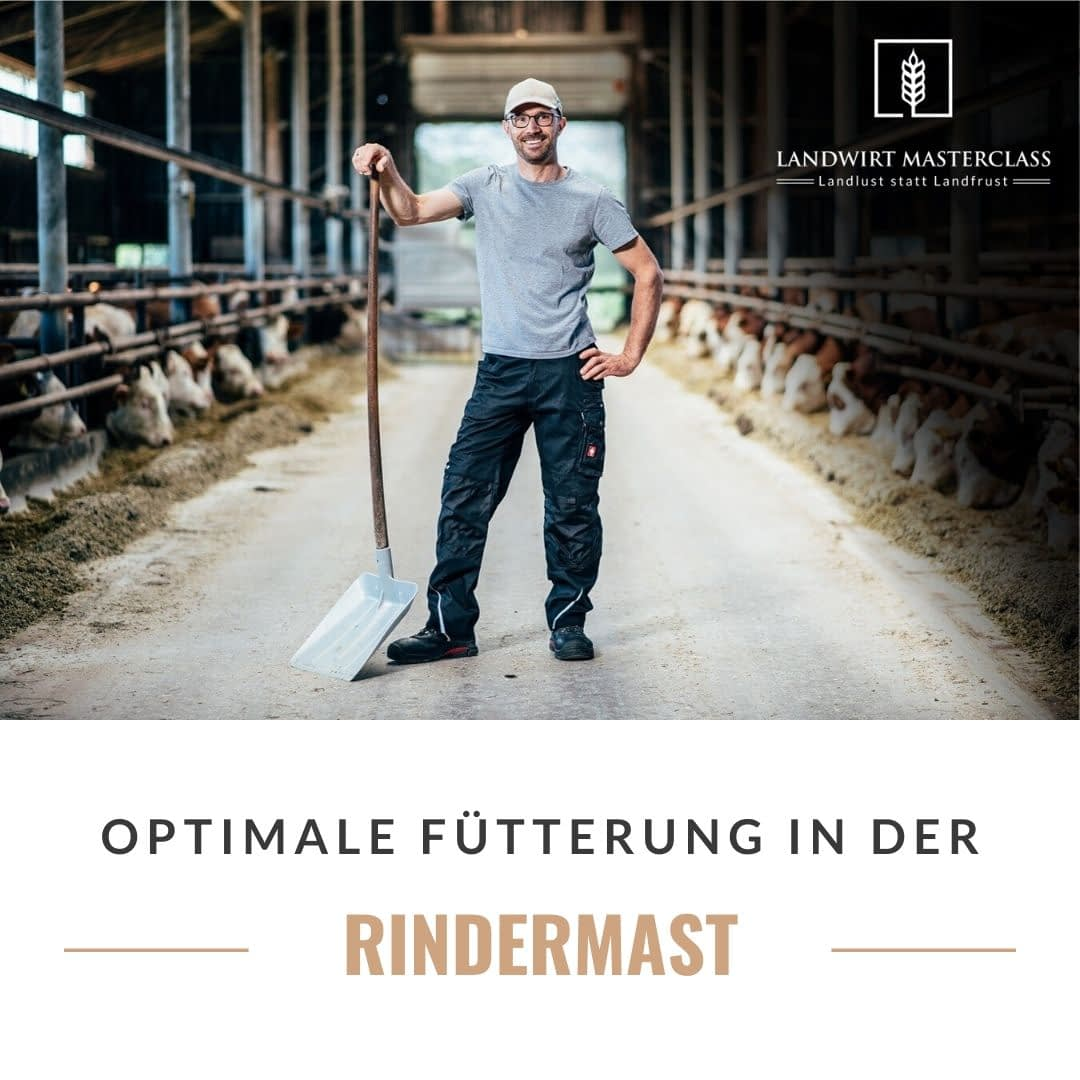 Optimale Fütterung